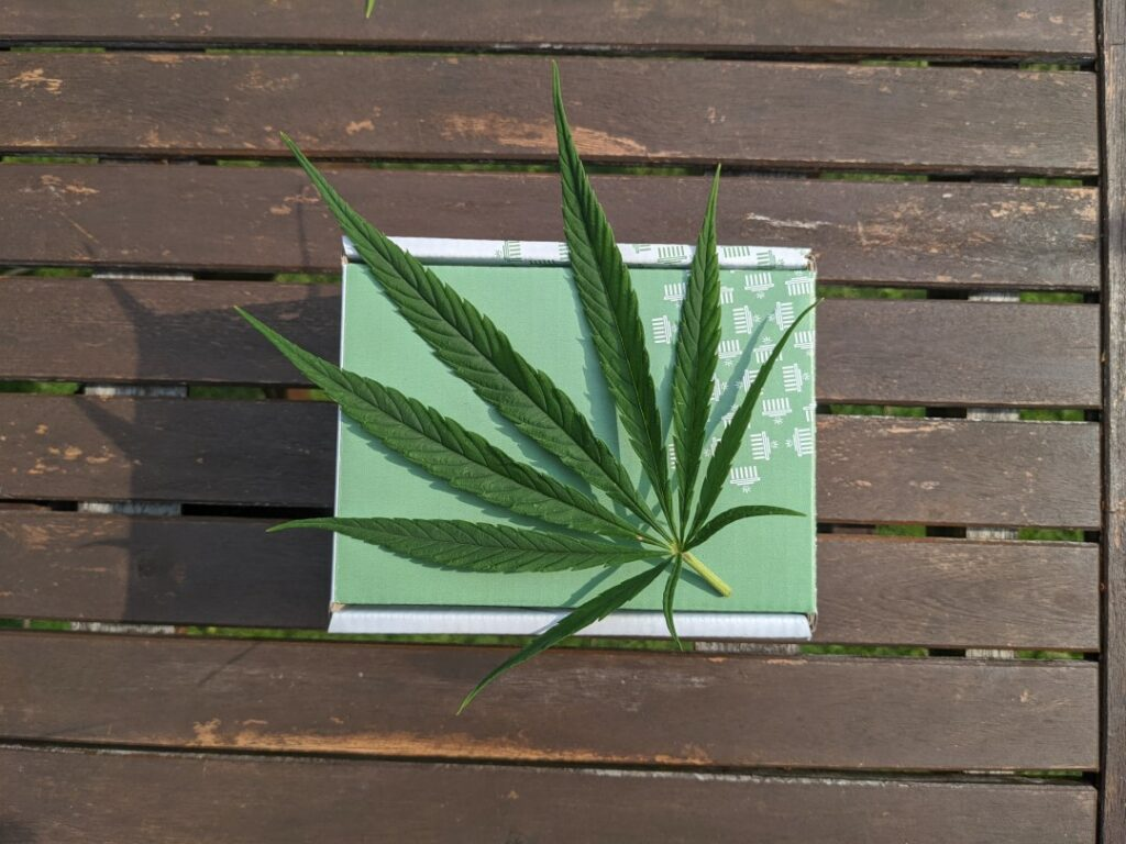 hemp plant on wooden table