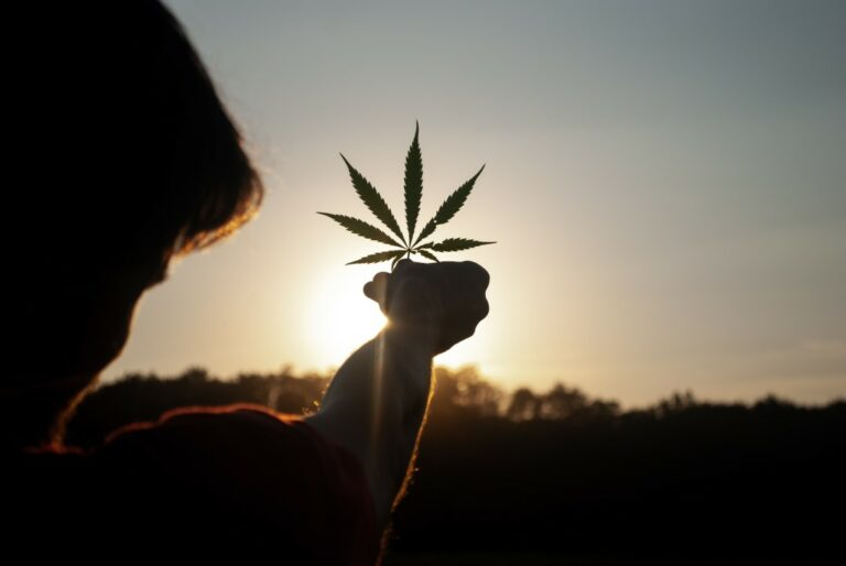 Cannabis leaf held to a setting sun