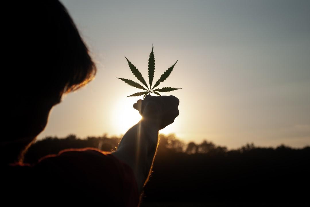 Cannabis leaf held to a setting sun